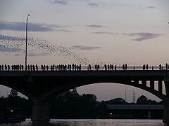 bats emerging from under the Congress Avenue bridge at dusk in Austin
