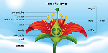 diagram of parts of a flower